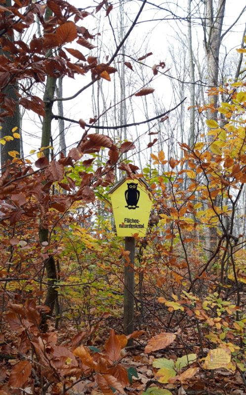 Denksteine-Tour Eschen-Ahorn-Wald
